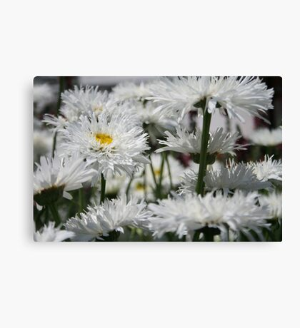 It's a nice day for a white weeding... Canvas Print