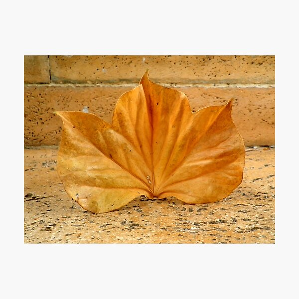 Golden Leaf  Photographic Print