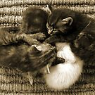 Kitten Furball by redph