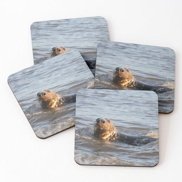 Grey Seal - Winterton Norfolk. Coasters (Set of 4)