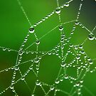Web by Inese