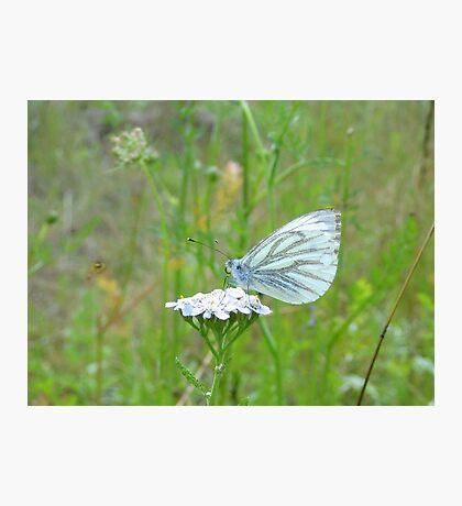 Tiny White Photographic Print