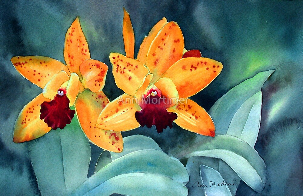 Yellow orchid by Ann Mortimer