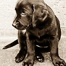Portrait of a Puppy by Nancy Stafford