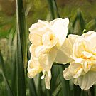 Sparkled Double Daffies by Susan Blevins