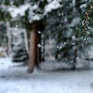 Veil of Snowflakes by Kasia-D