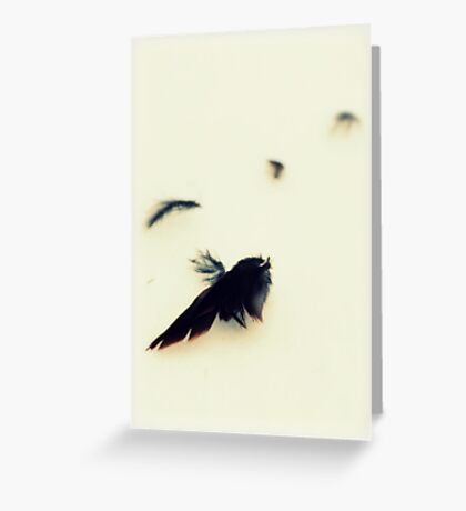 Feathers in the Snow Greeting Card