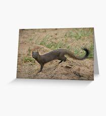 Manyara mongoose Greeting Card