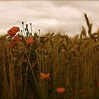 Nine red sweet kisses Waiting for a lost soul  by 1morephoto