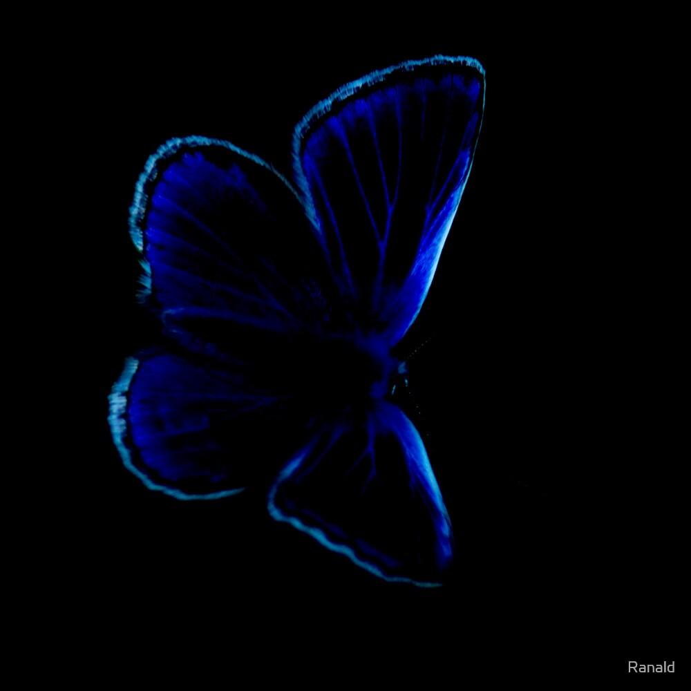 Polyommatus icarus by Ranald