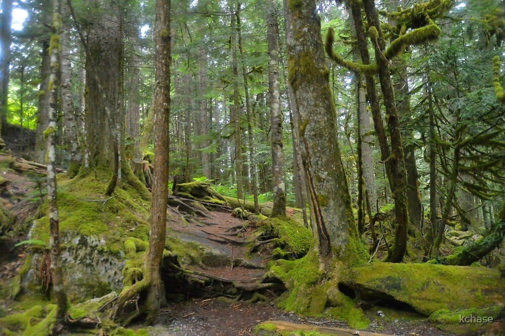 Deception Falls Trail by kchase