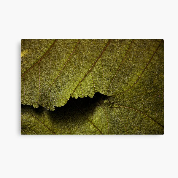 Fine leaf detail, and plenty of it! Canvas Print