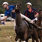 Jugiong Polocrosse # 1 by GailD