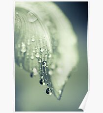 Water drops on Petal  Poster