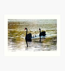 Swan Family Art Print