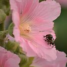 Bugs in Love by mjparsons
