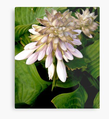 Hosta Flowers Metal Print