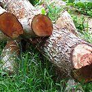 Logs of wood by Shiju Sugunan