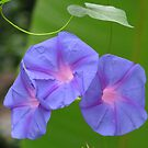 Three flowers by Shiju Sugunan