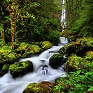 Elowah Falls I by Tula Top