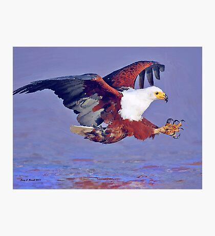 Eagle Strike Photographic Print