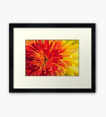 orange-red flower Framed Print