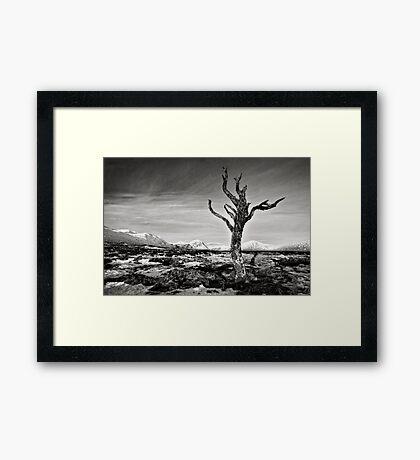Dead Tree, Rannoch Moor, Scotland Framed Print