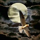 Night Flight by Linda Lees