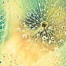 Dewdrops on Dandelion - 11 by BobbiFox