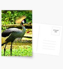 Royalty Strut Postcards