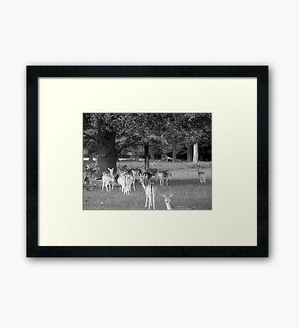 Richmond Park Deer Framed Print