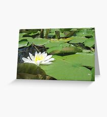 Green Lillies Greeting Card