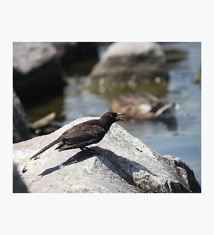 Posing Shore Bird Photographic Print