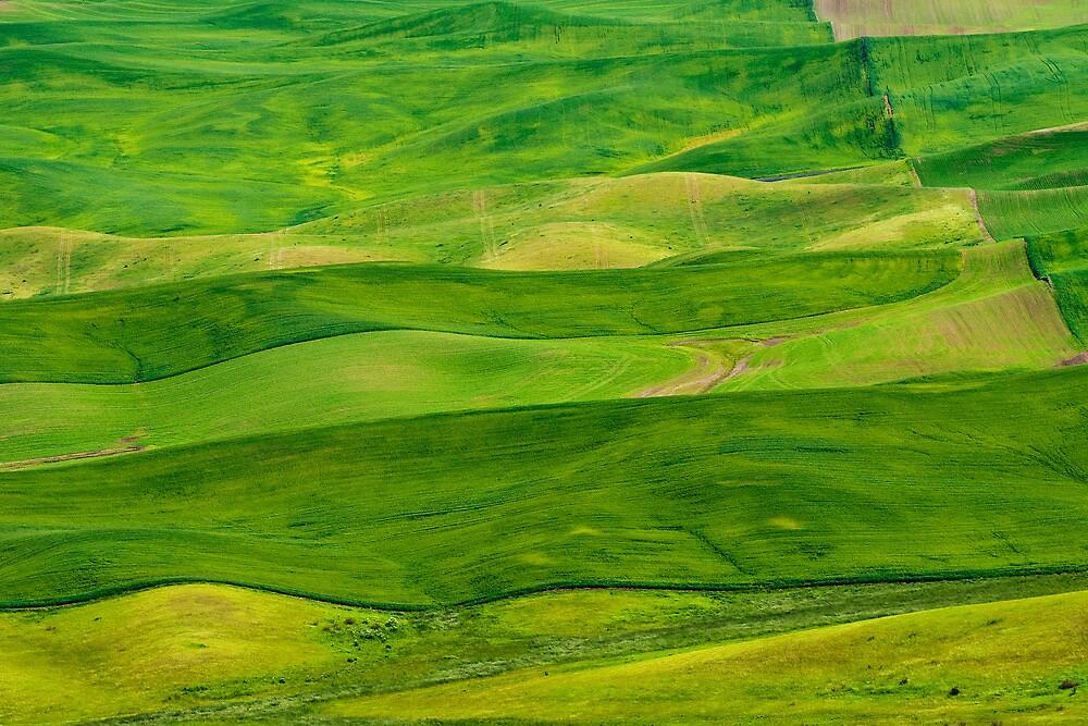 Stripes by Dan Mihai