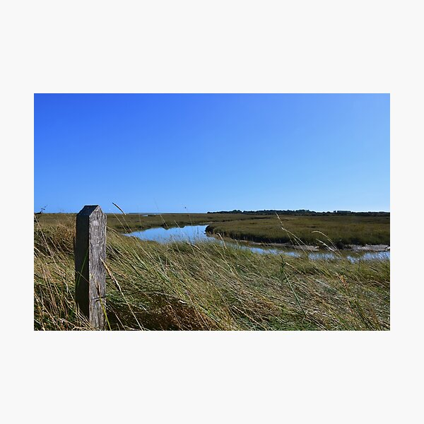 Wild Grasses Wetland Pagham Harbour Sussex Photo Photographic Print