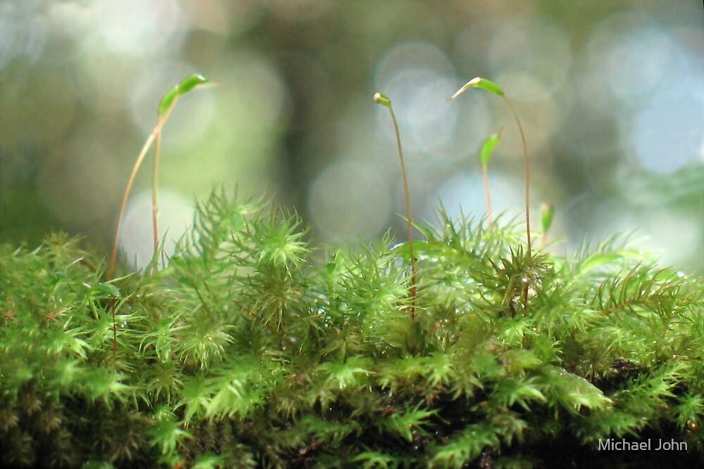 Moss Capsules by Michael John