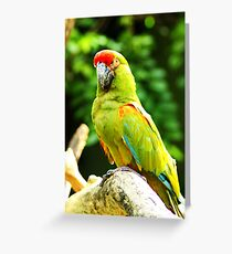Green Camouflage Greeting Card
