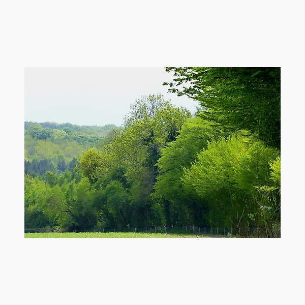 Green Meadow Heart of Sussex Photo Photographic Print