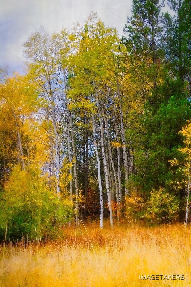 Ashton Idaho - Season Of Color (e) by IMAGETAKERS