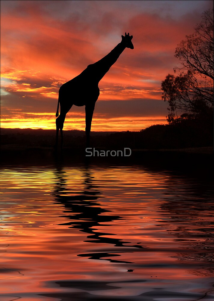 By the Waterhole by SharonD