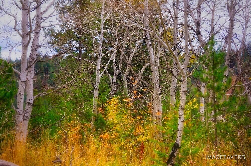 Ashton Idaho - Season Of Color (g) by IMAGETAKERS