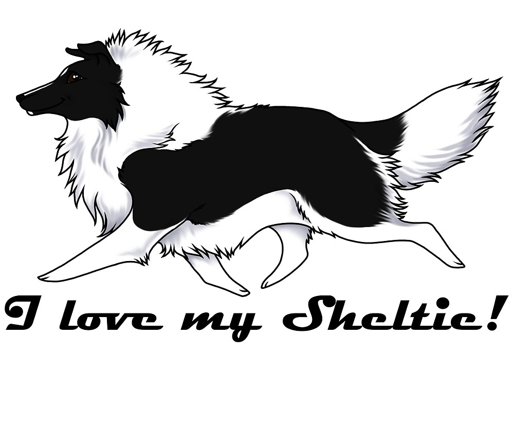 Love your bi-color Sheltie!!! by Kyle Lawrence