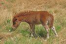 Chestnut Filly Foal by Jenny Brice