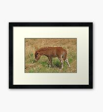 Chestnut Filly Foal Framed Print