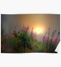 Cascades Fog and Fireweed Poster