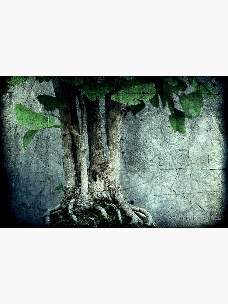 Roots by 2Bricks