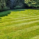 While there is still time to mow the lawn, grow a meadow by heidiannemorris