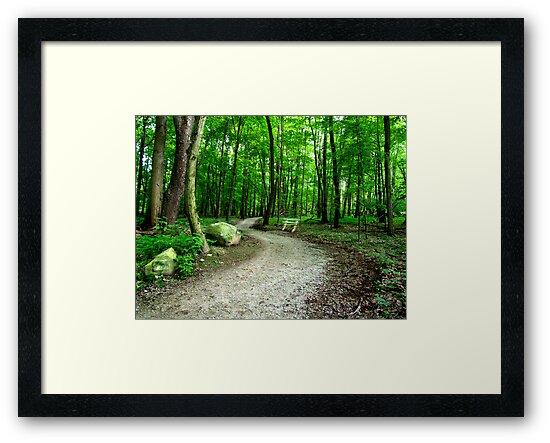 Summer Path by Marcia Rubin