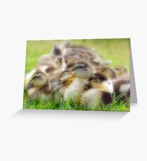 Bundle of Fluff Greeting Card