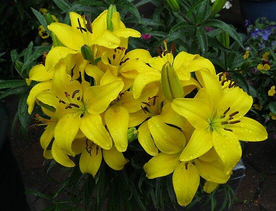 Lovely Lemon Lilies by BlueMoonRose